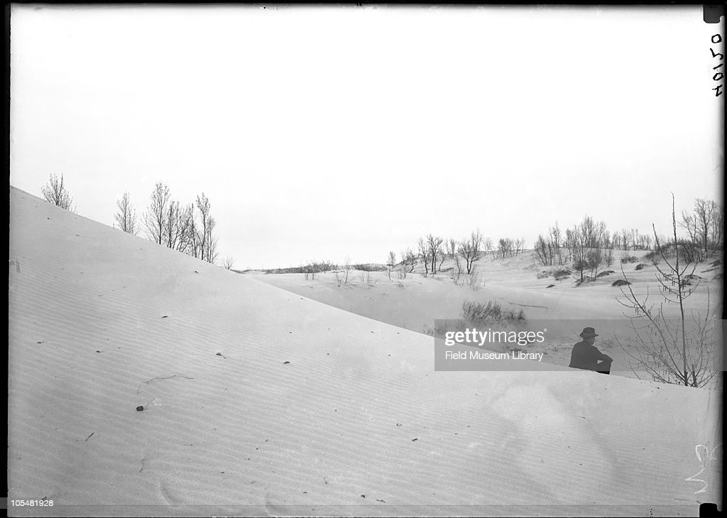 Sand, Trees, Man Sitting : News Photo