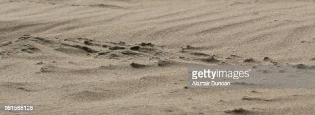 Sand Wind