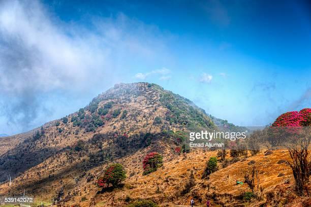 Sandakphu-Phalut & Singalila Trek
