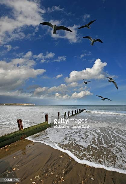 sandown bay, isle of wight. east coast gull patrol - s0ulsurfing imagens e fotografias de stock