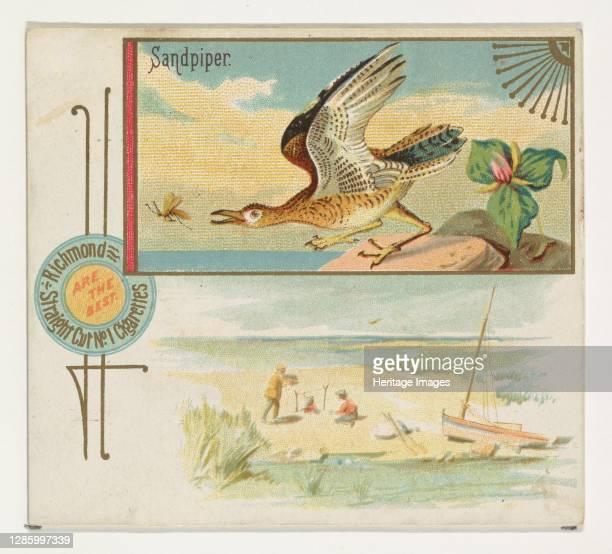Sandpiper, from the Game Birds series for Allen & Ginter Cigarettes, 1888-90. Artist Allen & Ginter.