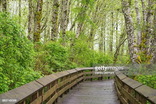 Sandpiper Trail boardwalk in alder tree grove, Grays Harbor National Wildlife Refuge, Washington State, USA