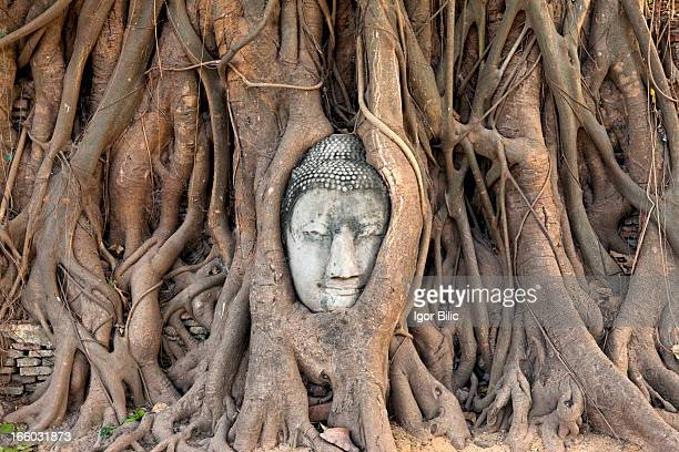 CONTENT] Sandstone Buddha head statue in tree roots of a banyan tree in Ayutthaya historical park Thailand Ayutthaya is the old Thai capital and...