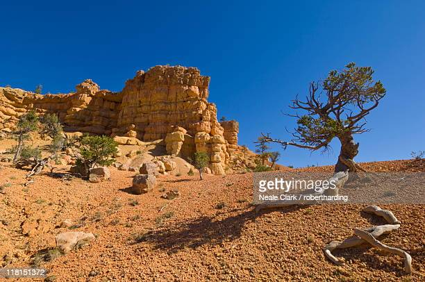 Sandstone cliffs of Claron formation, Pink Ledges Trail, Red Canyon, Utah, United States of America, North America
