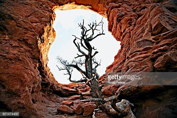 sandstone rock arch with tree in arches national park, utah - robb reece stock-fotos und bilder
