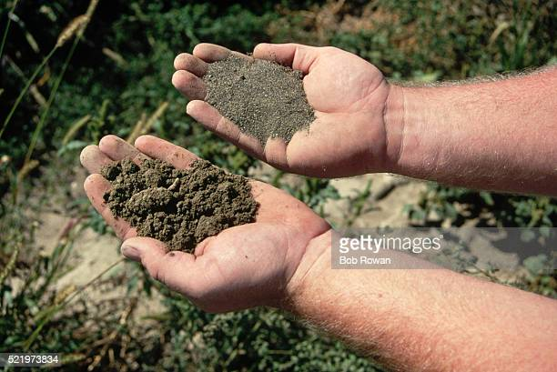 sandy and loam soil - loam stock photos and pictures