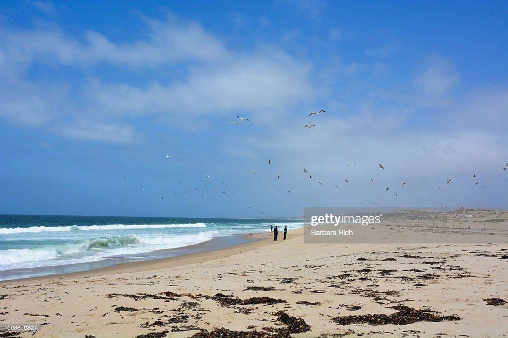 Sandy beach and clouded blue sky on Monterey Bay : Stock Photo