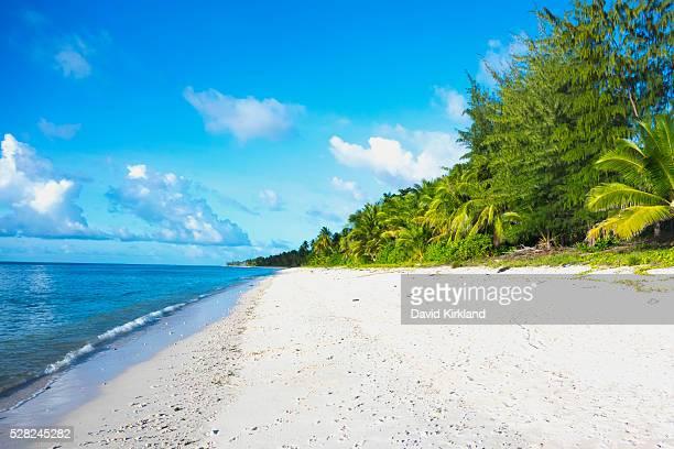 sandy beach and lush vegetation along the coastline; nauru - nauru stock pictures, royalty-free photos & images