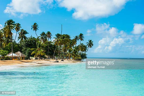 sandy beach and palm trees of pigeon point, tobago, trinidad and tobago, west indies, caribbean, central america - tobago stock pictures, royalty-free photos & images