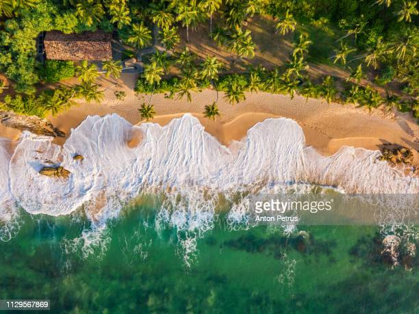 sandy beach at sunset. sri lanka, aerial view - sri lanka stock-fotos und bilder