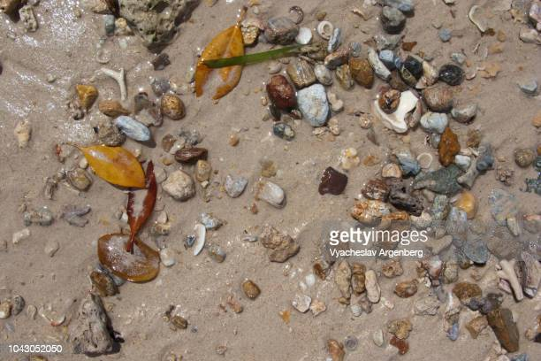 Sandy beach close up, environmental patterns, tropical leaves, moss, stones, water, mollusk shell, particles of sand and soil, Palawan, Philippines