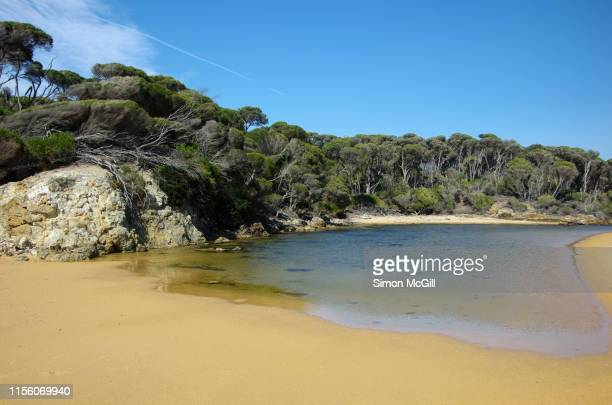 sandy beach creek mouth at bournda beach, bournda national park, new south wales, australia - estuary stock pictures, royalty-free photos & images