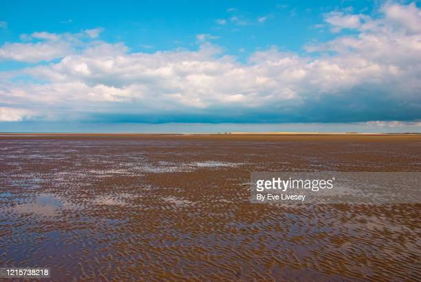 sandy beach - horizon stock pictures, royalty-free photos & images