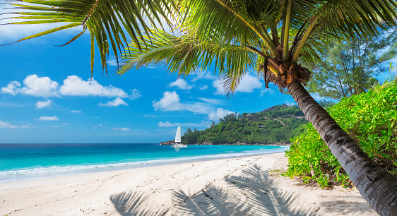 Sandy beach with palm trees and a sailing boat 931160498