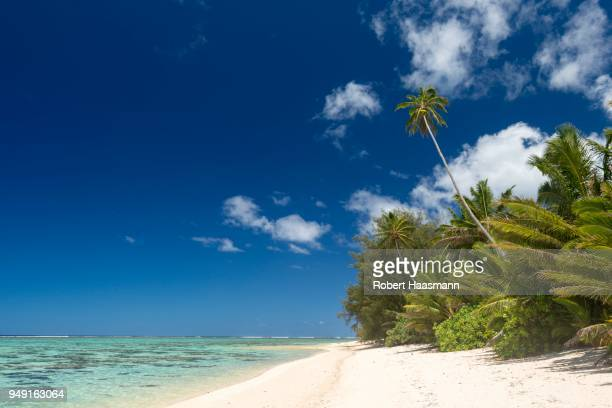 Sandy beach with palm trees and turquoise water, Rarotonga, Cook Islands