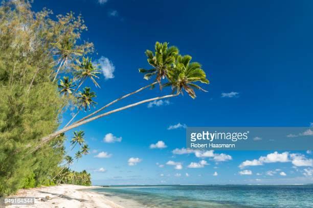 sandy beach with palm trees and turquoise water, rarotonga, cook islands - rarotonga foto e immagini stock