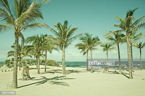 sandy beach with palm trees - image stock pictures, royalty-free photos & images