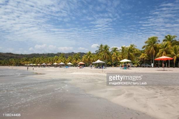 sandy beach with palm trees, playa carrillo, samara, nicoya peninsula, guanacaste province, costa rica - guanacaste stock-fotos und bilder