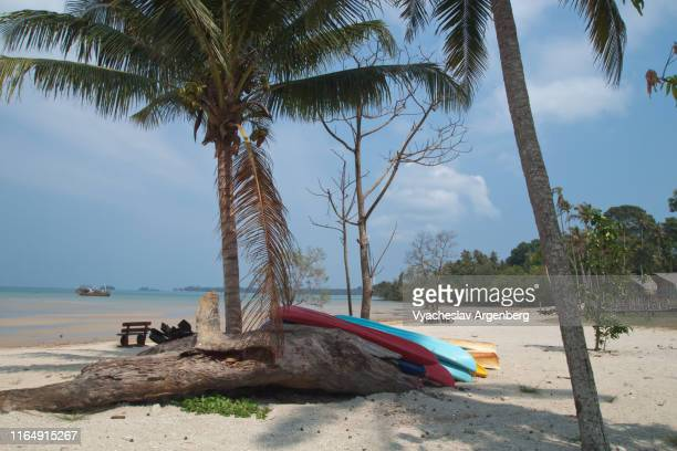 sandy beach with palm trees, sunny afternoon, tropical paradise, koh mak island, thailand - golf von thailand stock-fotos und bilder