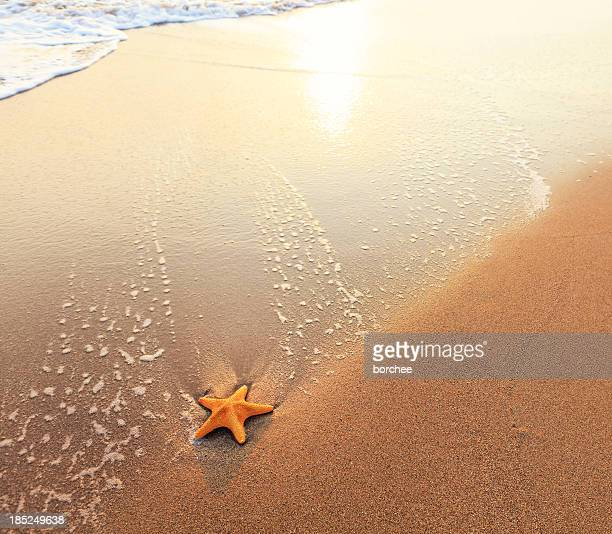 sandy beach with starfish - starfish stock pictures, royalty-free photos & images