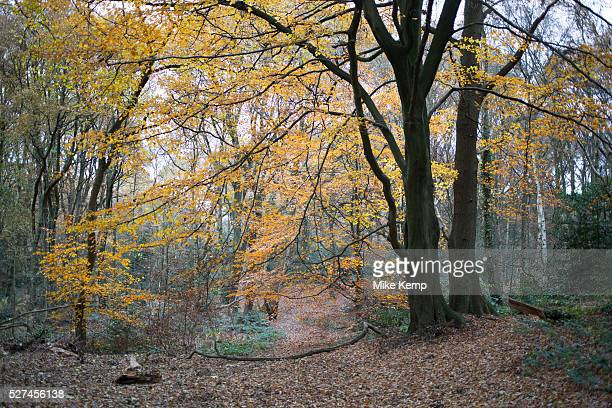 Sandy Heath ancient woodland and part of Hampstead Heath is a large ancient London park covering 320 hectares This grassy public space is one of the...