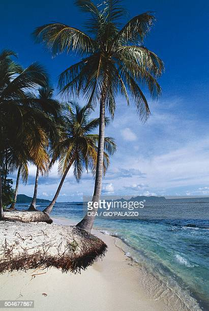 Sandy Island islet covered with palm trees and surrounded by a coral reef Carriacou Grenada