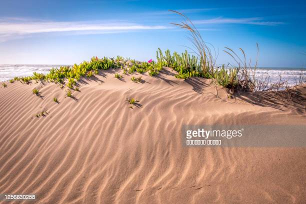 sandy ocean coast at sunset. atlantic ocean, morocco - champagne colored stock pictures, royalty-free photos & images