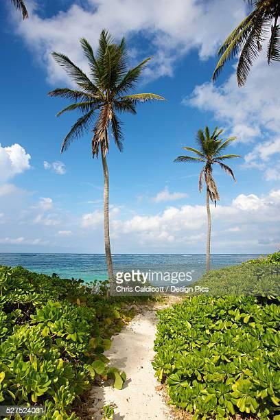 A sandy path towards the caribbean sea