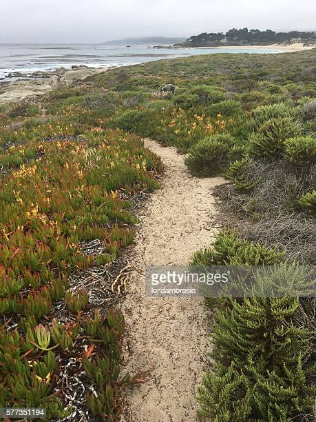 Sandy pathway on the bluff above the Pacific Ocean.