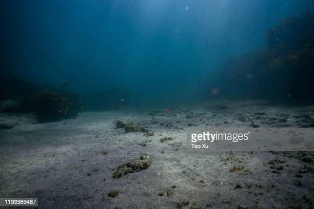 sandy sea bottom - deep stock pictures, royalty-free photos & images