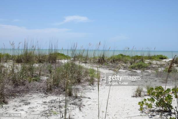 Sanibel Island Natural Beach