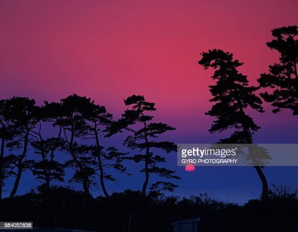 sanin beach in the evening, tottori prefecture, japan - 鳥取県 無人 ストックフォトと画像