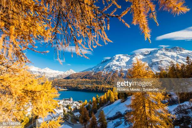 sankt moritz framed by colorful woods switzerland - saint moritz foto e immagini stock