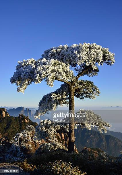 sanqingshan scenery,jiangxi province,china - jiangxi province stock photos and pictures