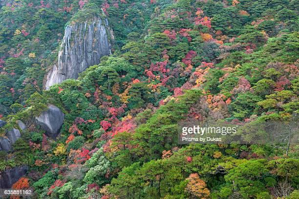 Sanquingshan national park, Jiangxi province.