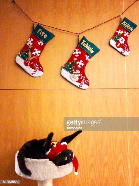 santa bombay cat in christmas - christmas kittens stock pictures, royalty-free photos & images