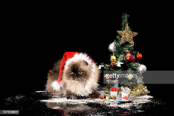 santa cat - christmas kittens stock pictures, royalty-free photos & images