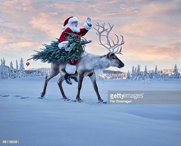 Santa Claus and a Christmas Tree on a reindeer