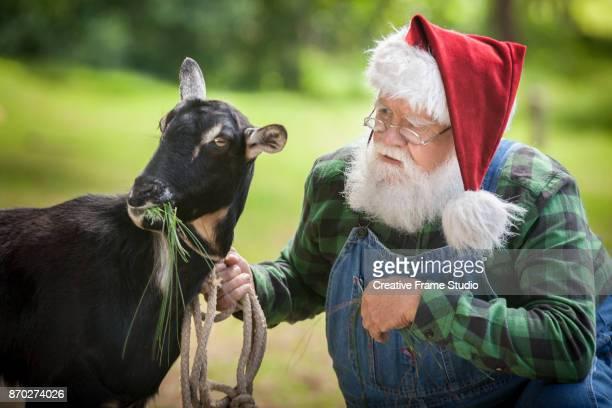 Santa Claus feeding a Goat.