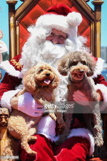 Santa Claus holds two dogs as he poses for a photograph at Luna Park on December 24 2018 in Sydney Australia Hundreds of locals and international...