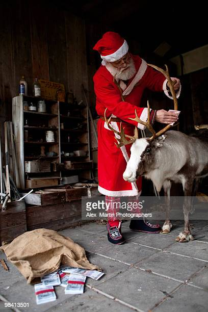 Santa Claus in a barn with a reindeer Sweden.