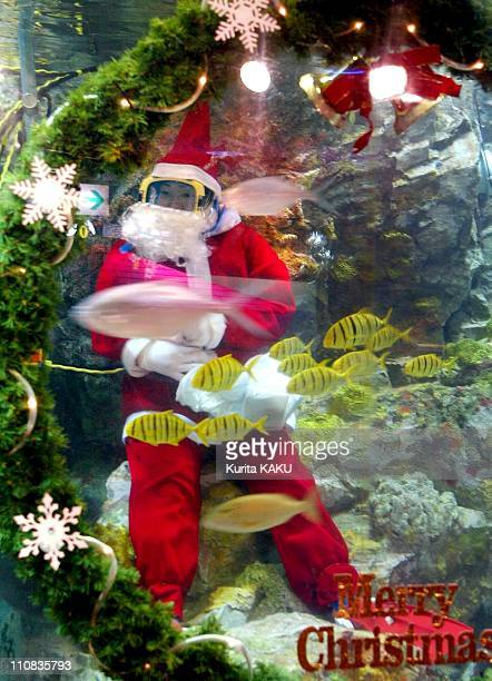 369 Large Fish Tank Photos And Premium High Res Pictures Getty Images