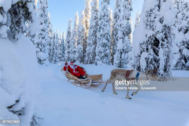 santa claus on reindeer sleigh in the snowy forest, ruka (kuusamo), northern ostrobothnia region, lapland, finland - renna foto e immagini stock