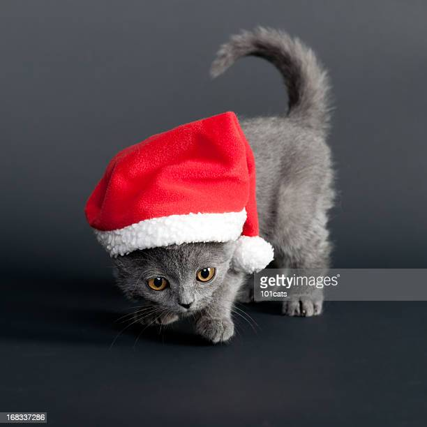 santa claus - christmas kittens stock pictures, royalty-free photos & images