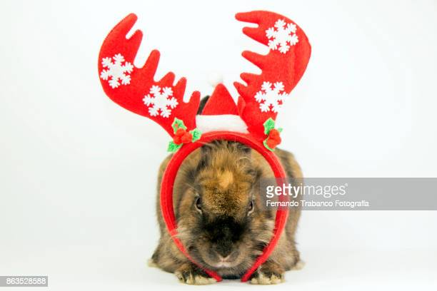 Santa claus rabbit