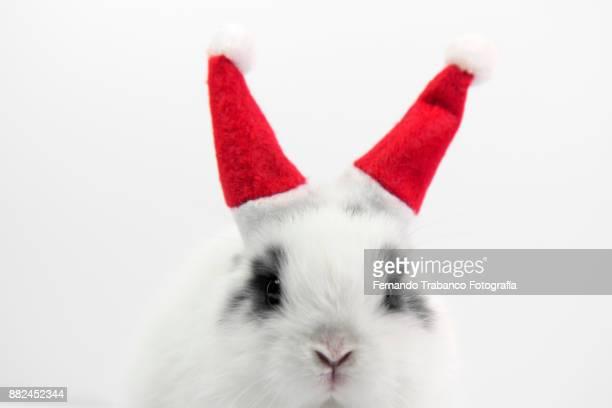 santa claus rabbit - happy birthday cat stock photos and pictures