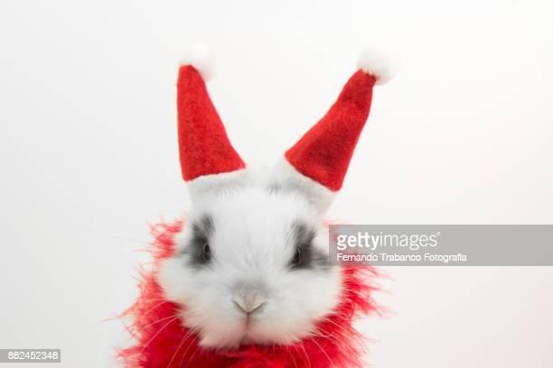 santa claus rabbit - reyes magos regalos fotografías e imágenes de stock