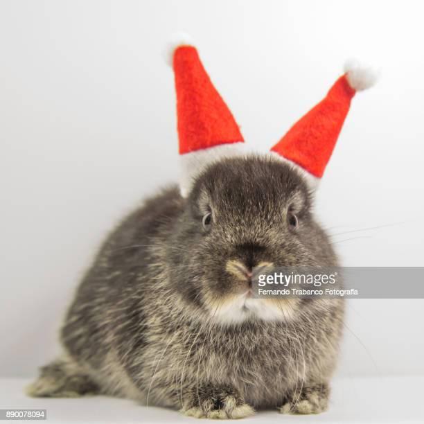 Santa claus rabbit