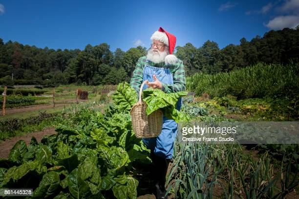 Santa Claus walking thru his magnificent vegetable garden holding a wicked basket full of chard leaves