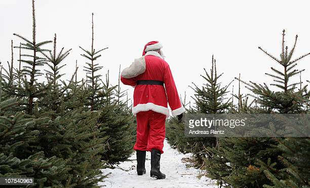 Santa Claus walks through a Christmas Tree Farm on December 12, 2010 in Mellensee near Berlin, Germany. According to the German timber industry...
